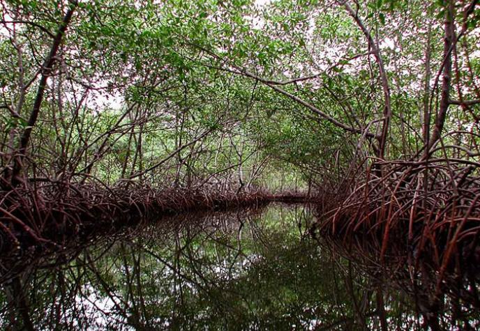 Wild Coast - Mangrove Swamp