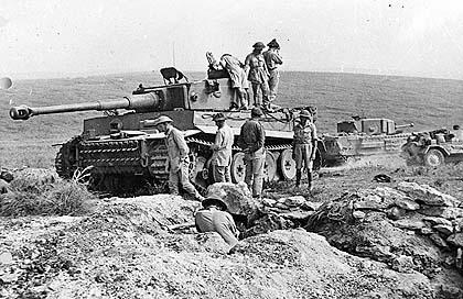 Tiger 131 captured in Tunisia