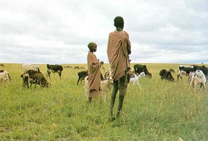 Cattle herders