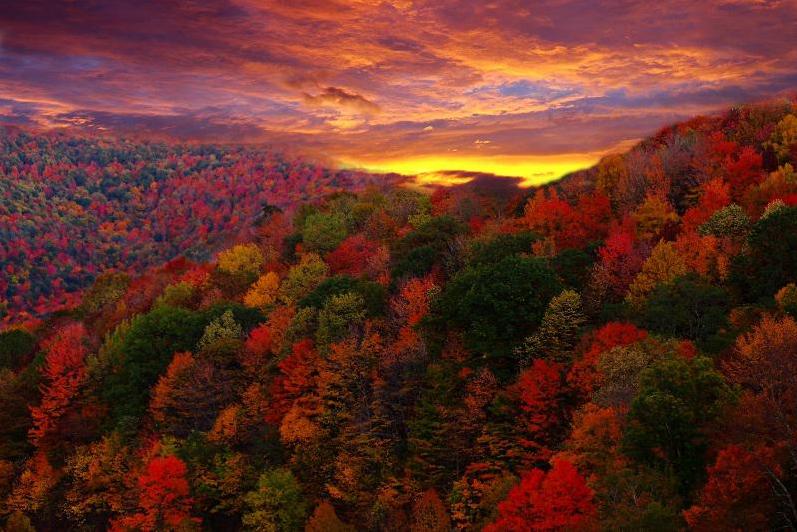 Forever autumn#1