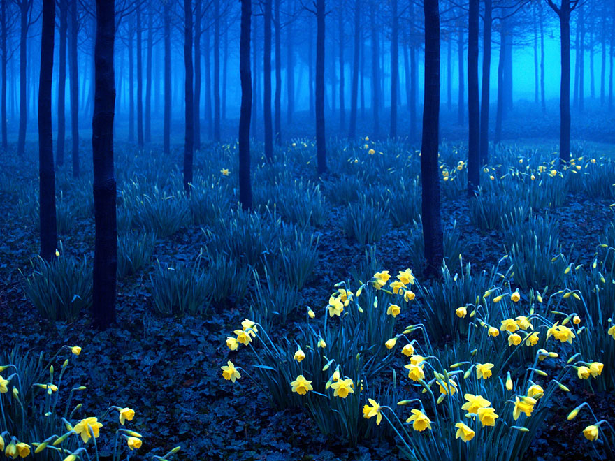 Black Forest in Germany