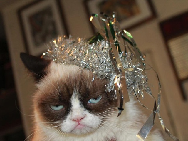 Animals after a Christmas excess#7