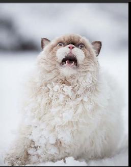 Animals first snow#10