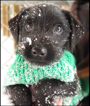 Animals first snow#11
