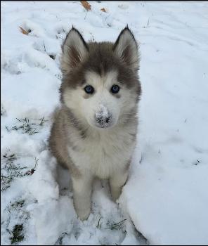 Animals first snow#12