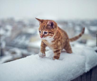 Animals first snow#14