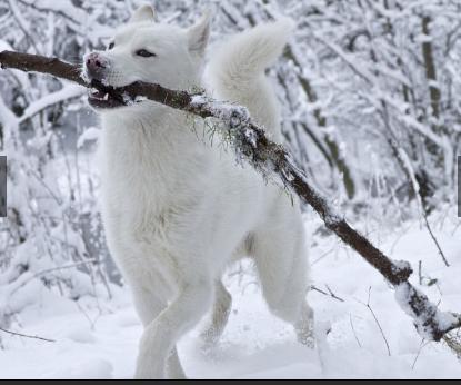 Animals first snow#15