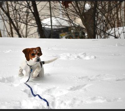 Animals first snow#4