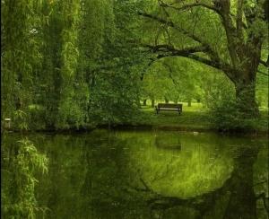 Green Lake#6