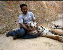 Tigers#18