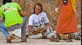Tigers#20
