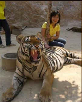 Tigers#23