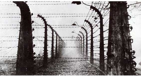 The Fence at Buchewald