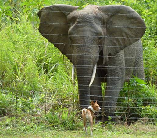 Elephant & a Dog#3