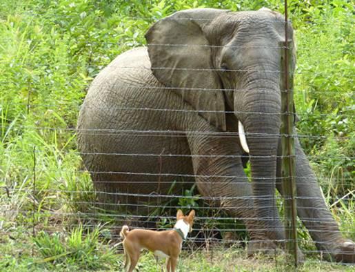 Elephant & a Dog#4