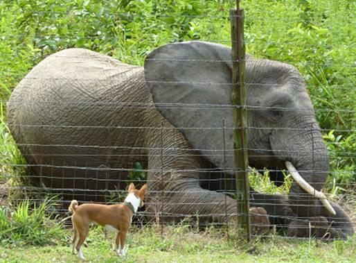 Elephant & a Dog#5