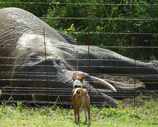 Elephant & a Dog#6