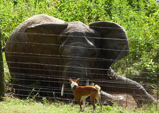 Elephant & a Dog#7