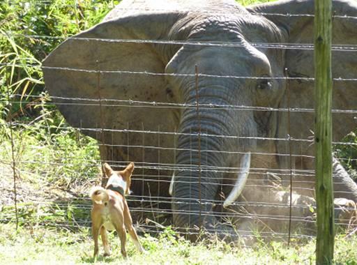 Elephant & a Dog#8