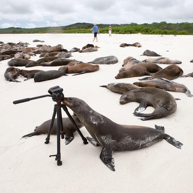 Modern Polar Expeditions#28 Curious sea lion
