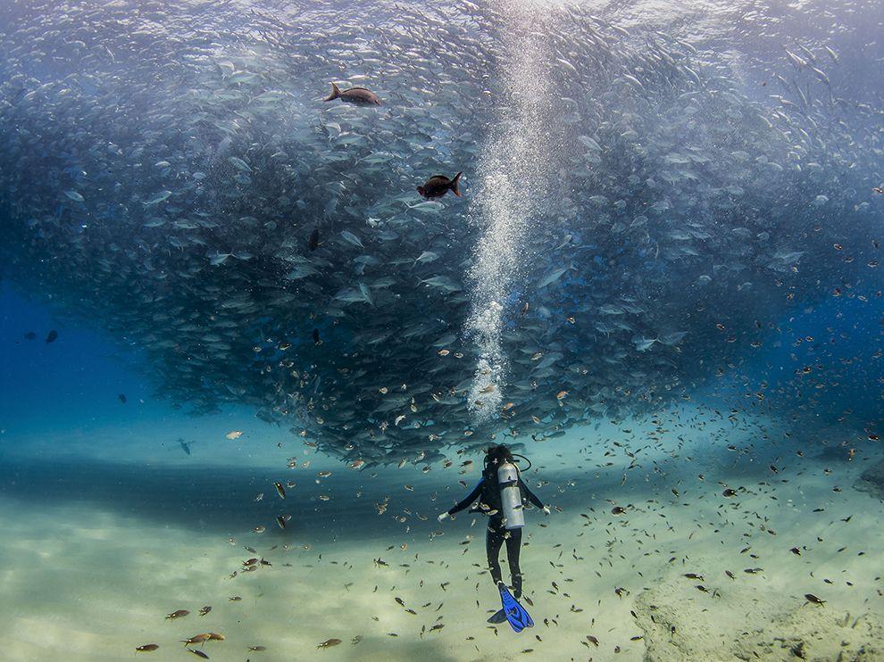 Cabo Pulmo, a marine park off Mexico's Baja California peninsula