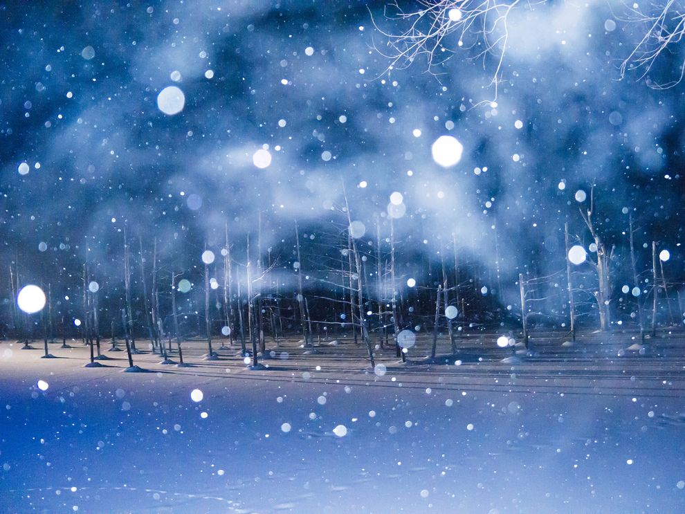 Evening snowfall at the Blue Pond in Biei in Hokkaido, Japan