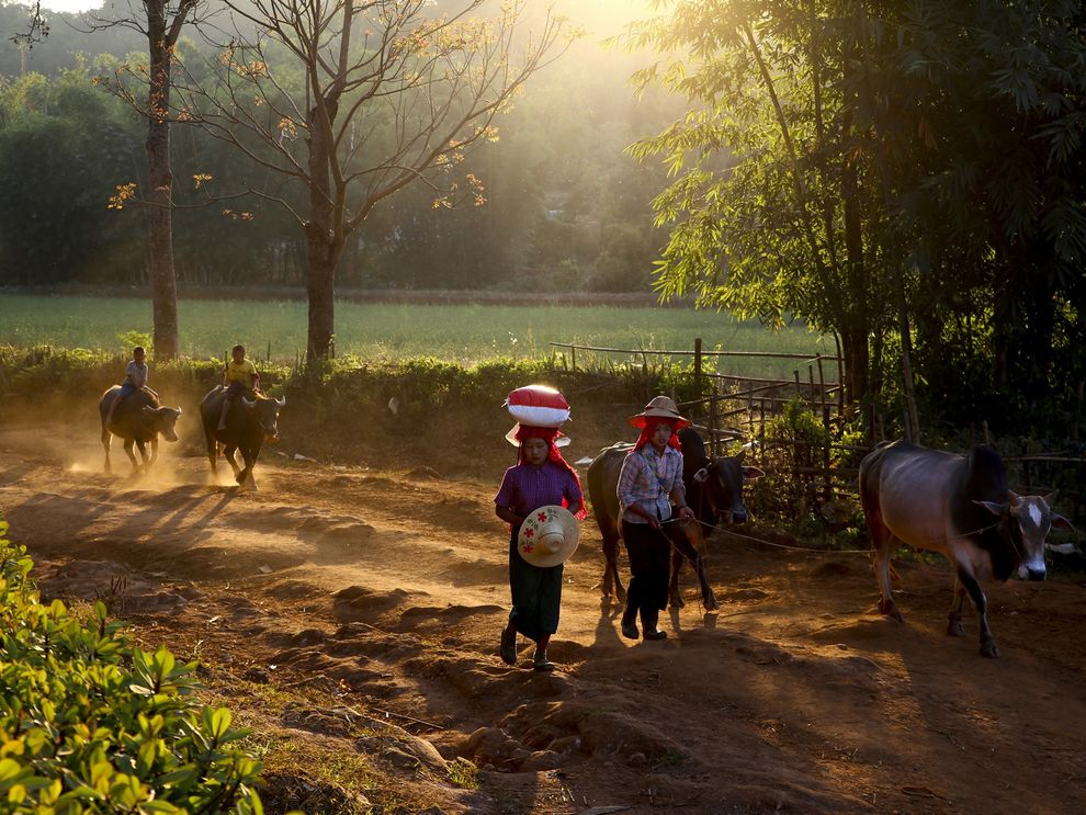 Walking between the mountain village of Kalaw and Inle Lake in Myanmar