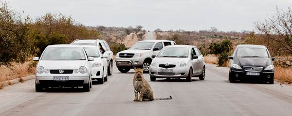 Animal road Blocks#2