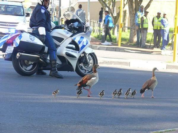 Animal road Blocks#4