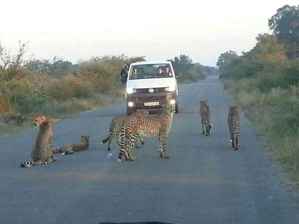 Animal road Blocks#5