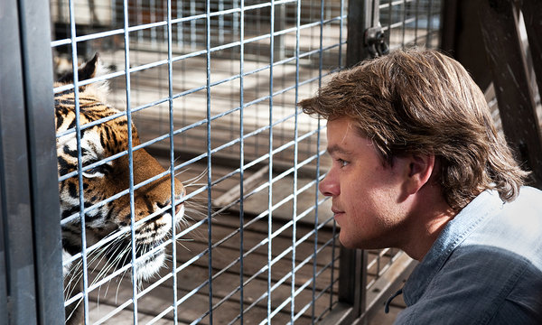A caged tiger