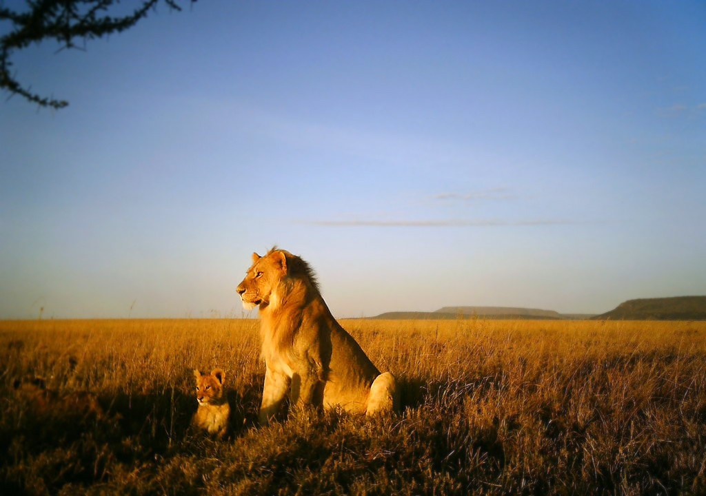 Will my grand children have this view of the Serengeti or will it only be on David Attenborough documentaries?
