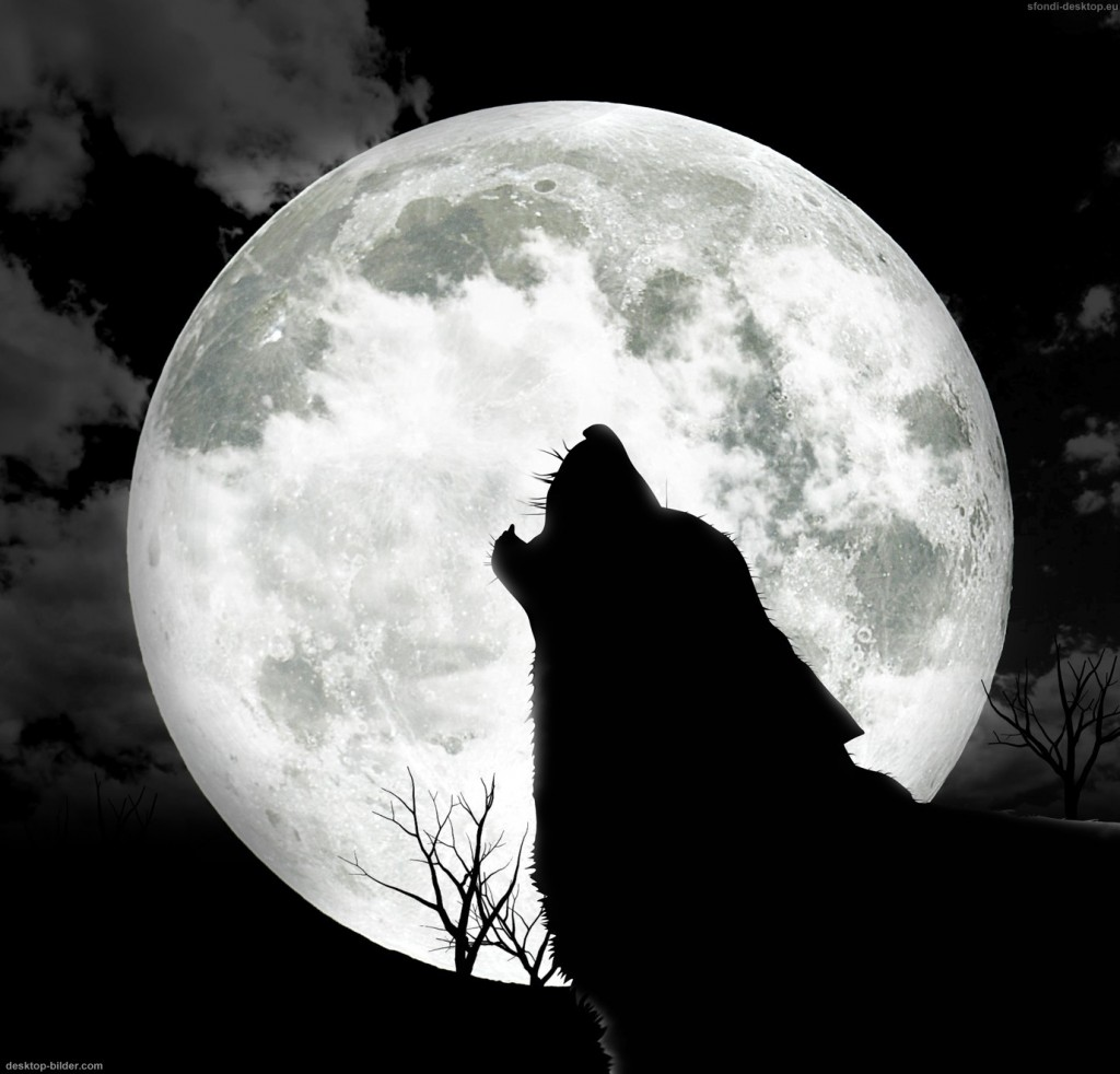 Wolves have been hunted to extinction over most of the world