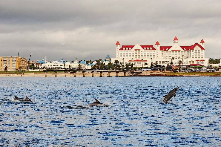 Jumping dolphins in front of Shark Rock Pier, with the Boardwalk Hotel in the background