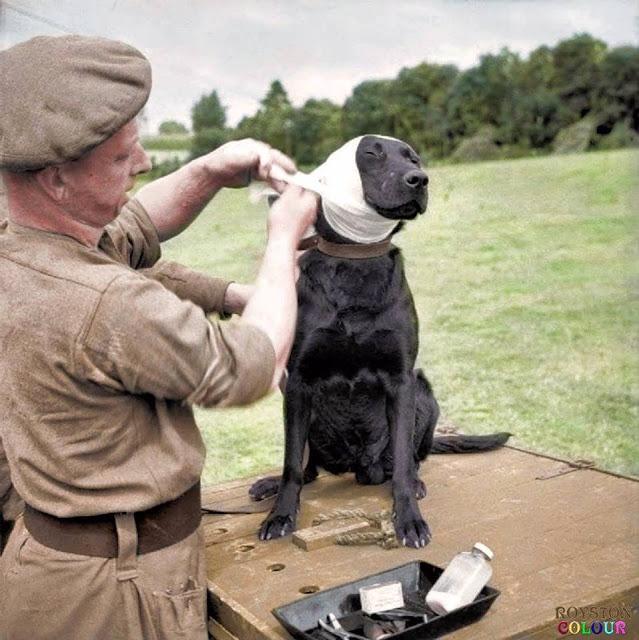 WW2 photo#38