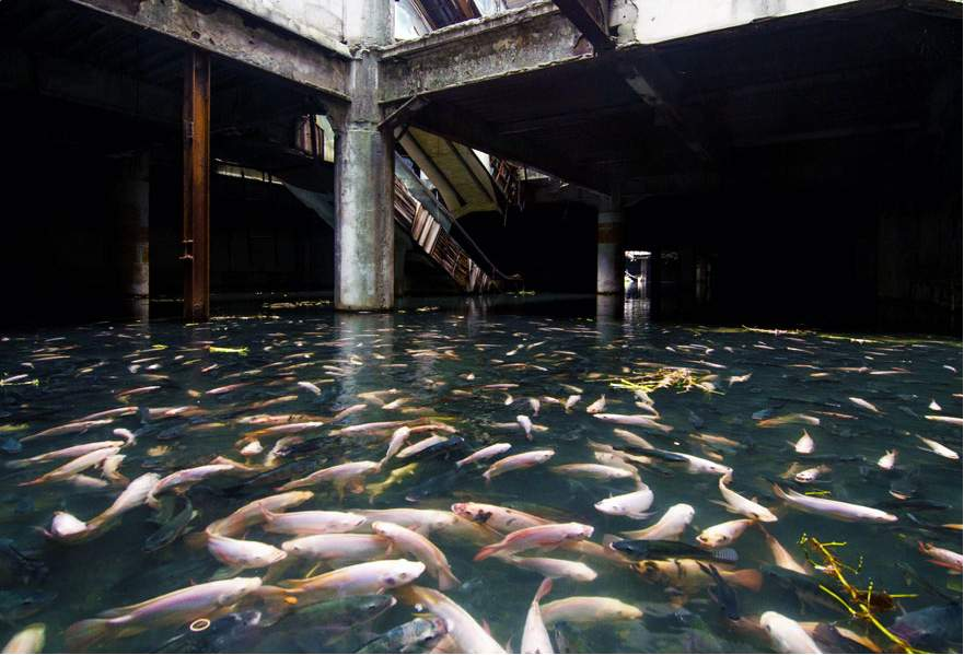 A shopping mall converted into an aquarium in Bangkok