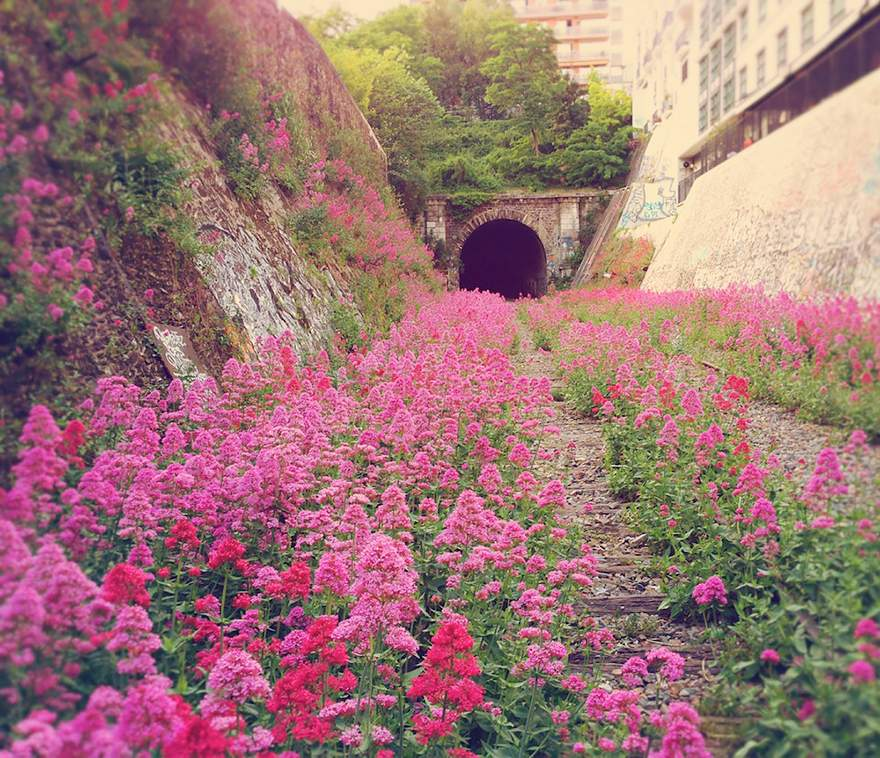 Flower bedekked railway line in Paris