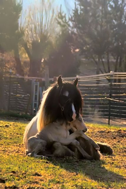 Newly born foal#1