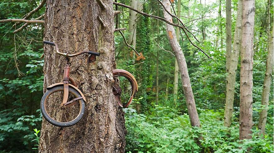 The unique bicycle tree