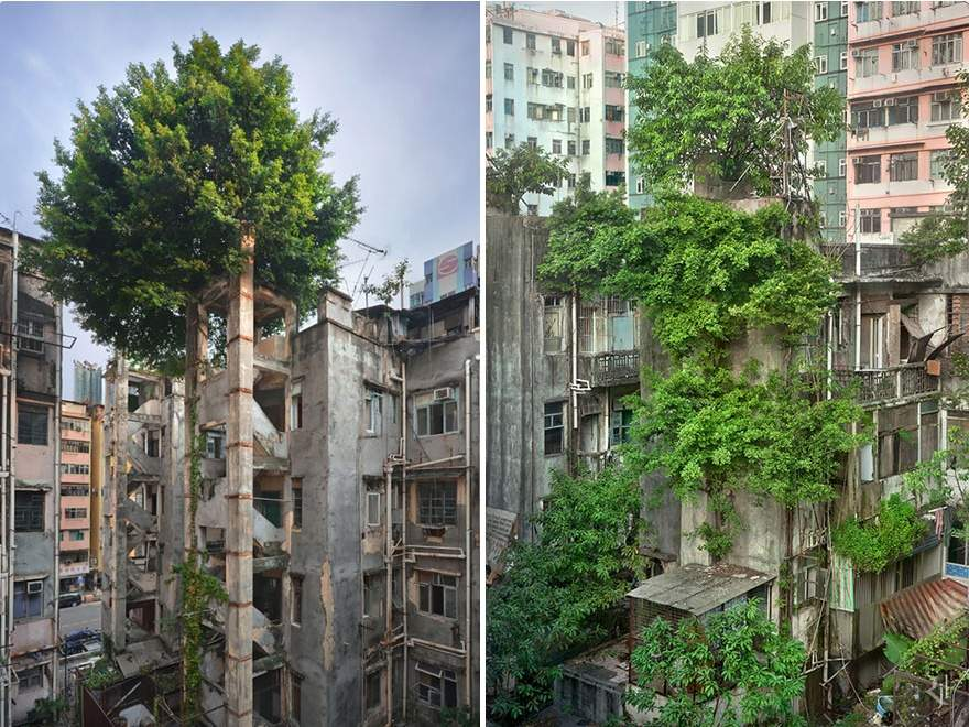 Trees overwhelming concrete in Hong Kong