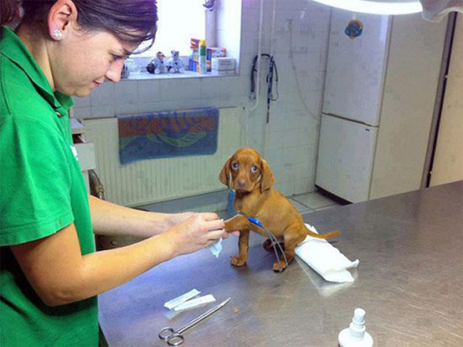 Animals at vet#24