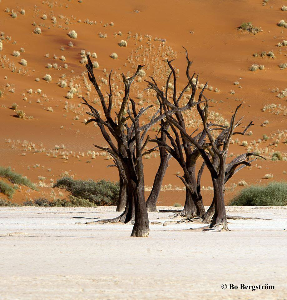 Dead trees in Deadvlei