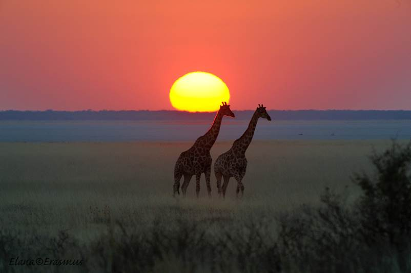 Sunset in South Africa#07