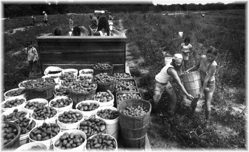 #15hippie-commune-the-farm-apple-season