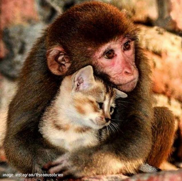 A monkey and a kitten