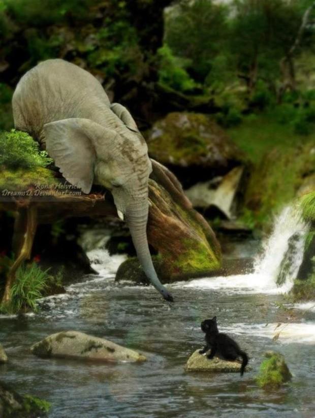Animals saving other animals#1