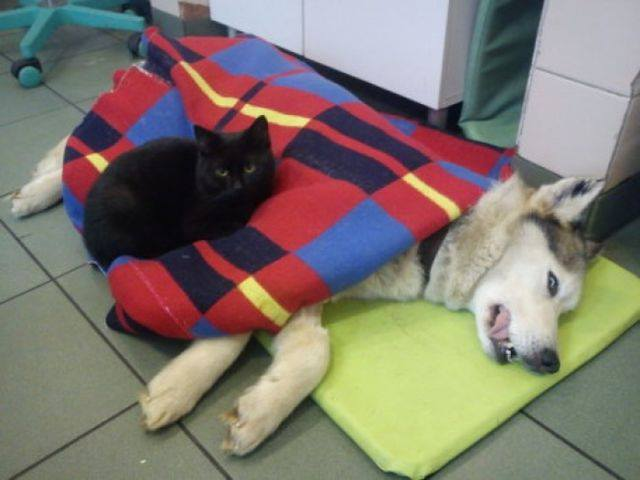 Cat always comforts sick animals#6