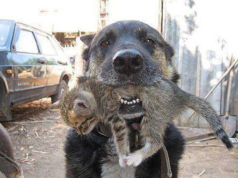 Dog saving a kitten