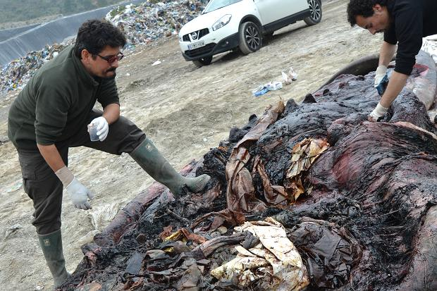 Plastic recovered from a dead whale's stomach#2