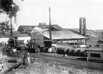 Sugar Cane Factory at Darnall